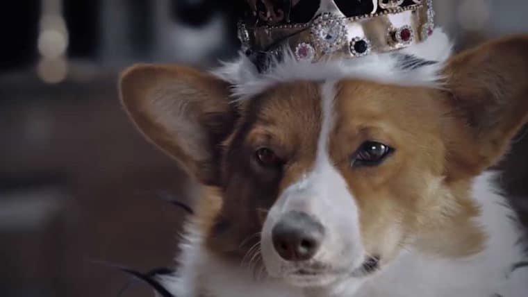 The Crown, da Netflix, ganha versão AUdorável da família reAU