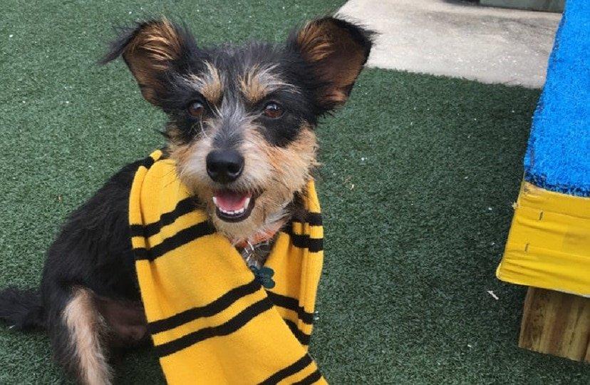 Esse abrigo de animais identifica seus cachorros de acordo com as casas de Hogwarts