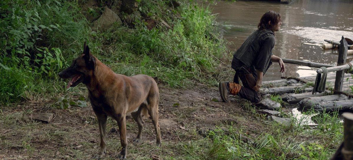 The Walking Dead | Fãs lançam petição para que cachorro de Daryl não seja morto na série