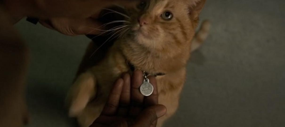 Capitã Marvel | Gato que não é gato, nome diferente das HQs e mais curiosidades do felino