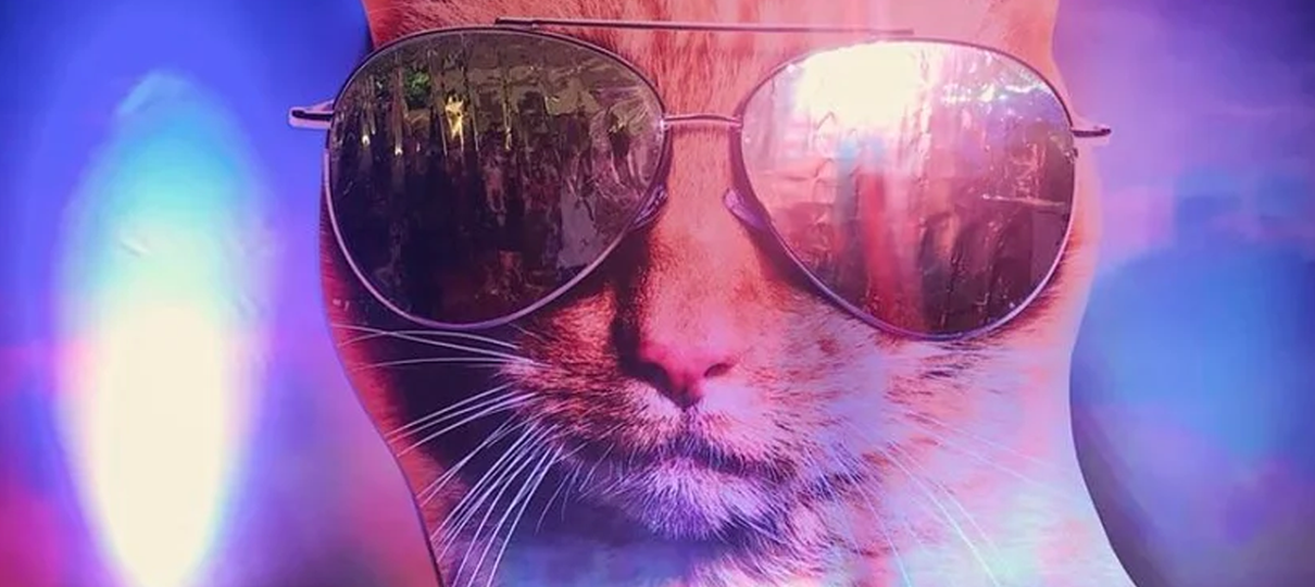 Capitã Marvel   Gato da heroína usa óculos em nova imagem promocional