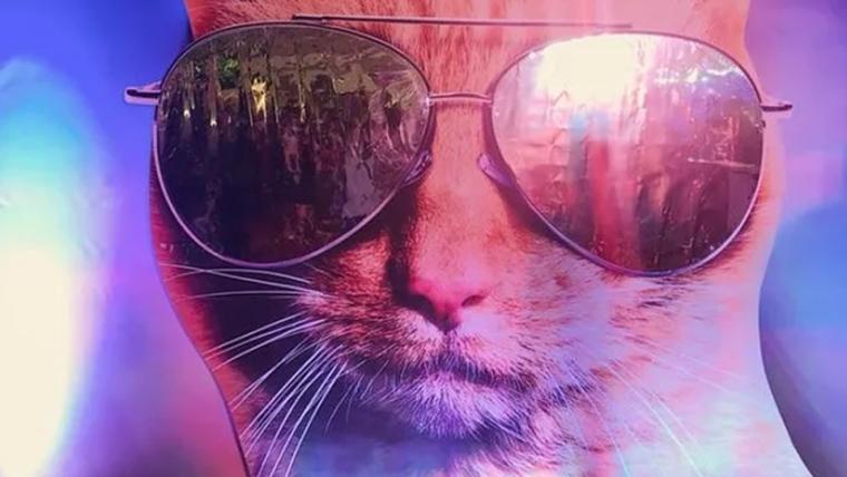 Capitã Marvel | Gato da heroína usa óculos em nova imagem promocional