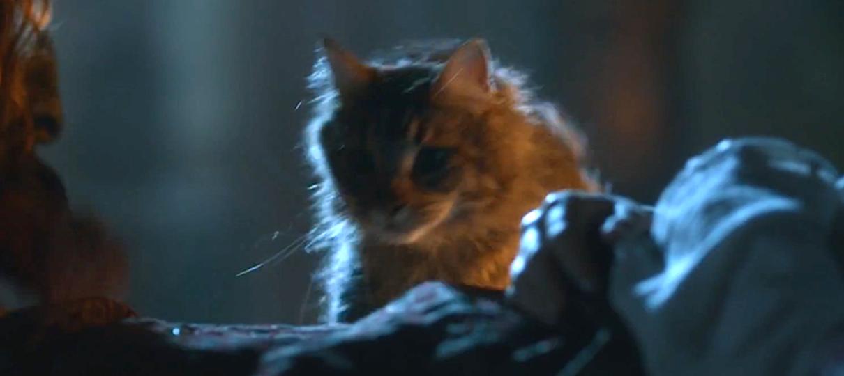 Game of Thrones | Showrunner revela que Cersei executou Ser Pounce, o gatinho de Tommen