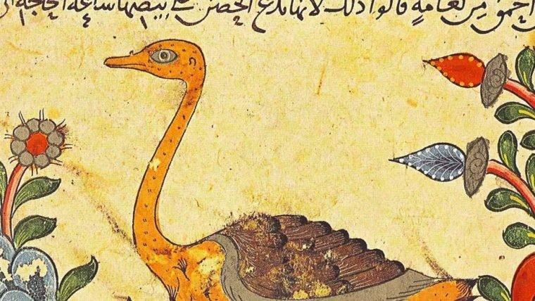Filósofo muçulmano formulou o conceito da evolução das espécies mil anos antes de Darwin