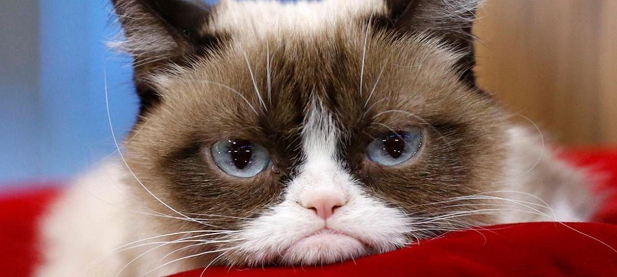 Mark Hamill faz homenagem a Grumpy Cat, gata rabugenta da internet
