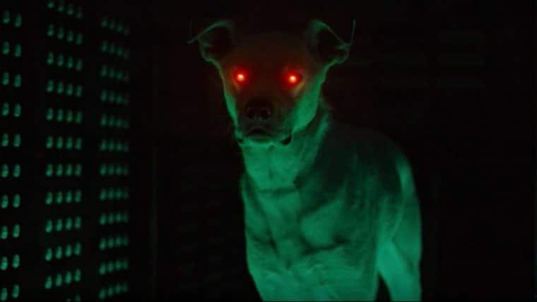 Titãs | Krypto aparece em imagem dos bastidores da segunda temporada