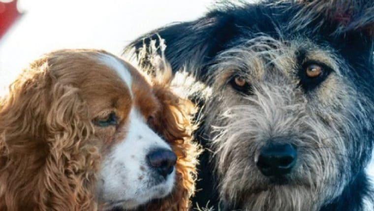 Estrela de A Dama e o Vagabundo foi adotado de um abrigo para animais