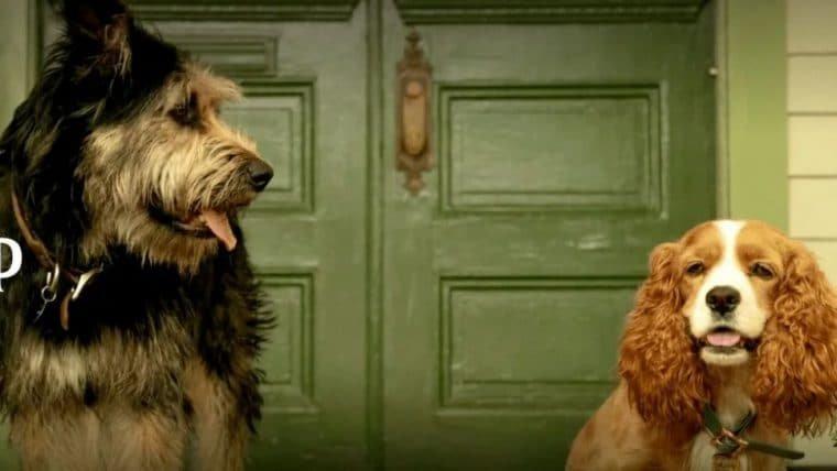 A Dama e o Vagabundo | Confira o elenco animal do live-action
