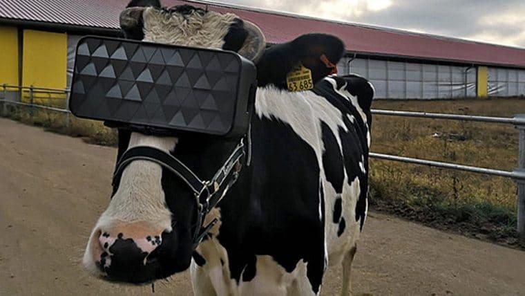 Fazenda russa está equipando vacas com óculos de realidade virtual
