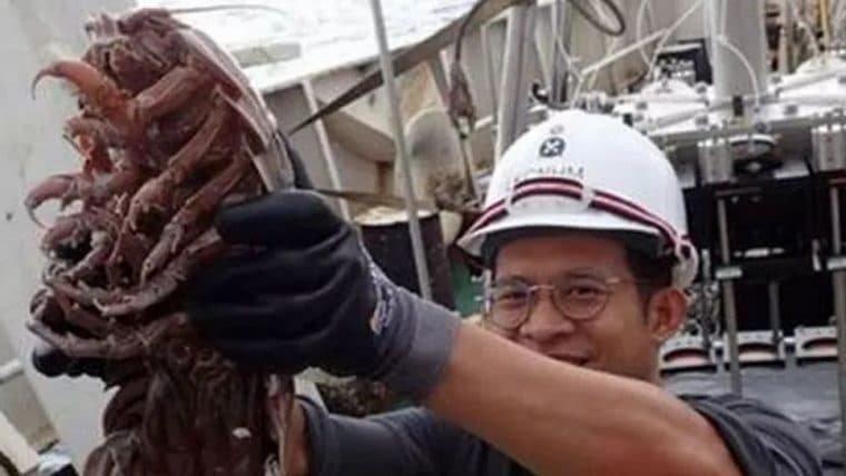 Pesquisadores descobrem barata gigante no mar da Indonésia