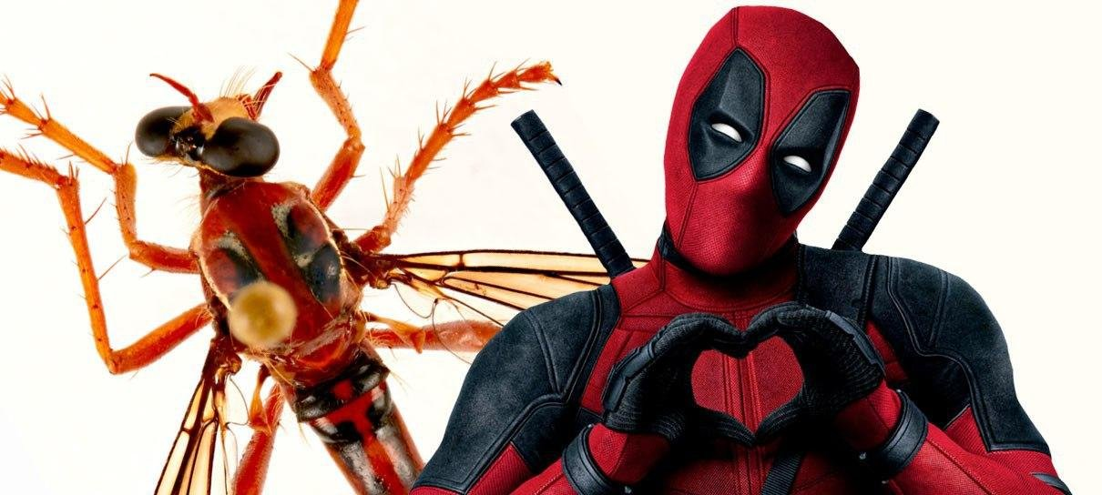 Cientistas australianos nomeiam novos insetos homenageando Stan Lee e Marvel