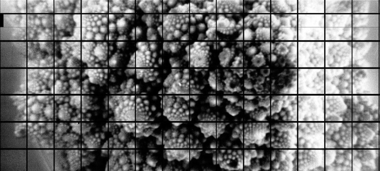 Maior foto do mundo tem 3,2 bilhões de pixels (e é de um tipo de couve-flor)