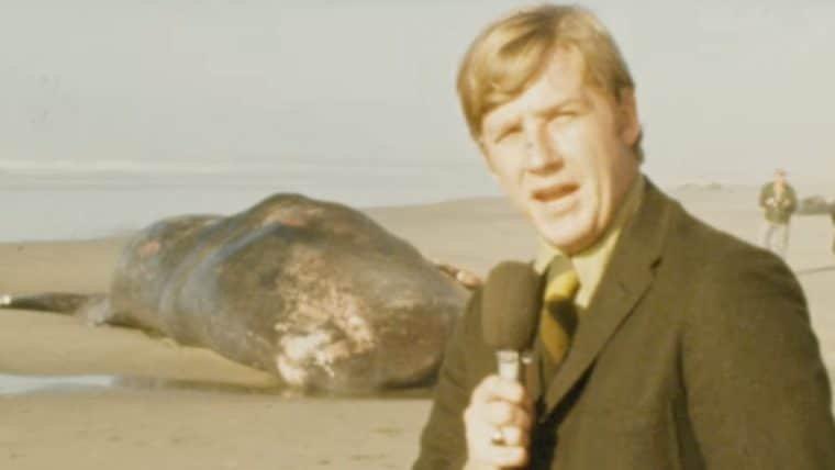 Há 50 anos, a TV mostrava que dinamite não era a melhor solução para uma baleia encalhada