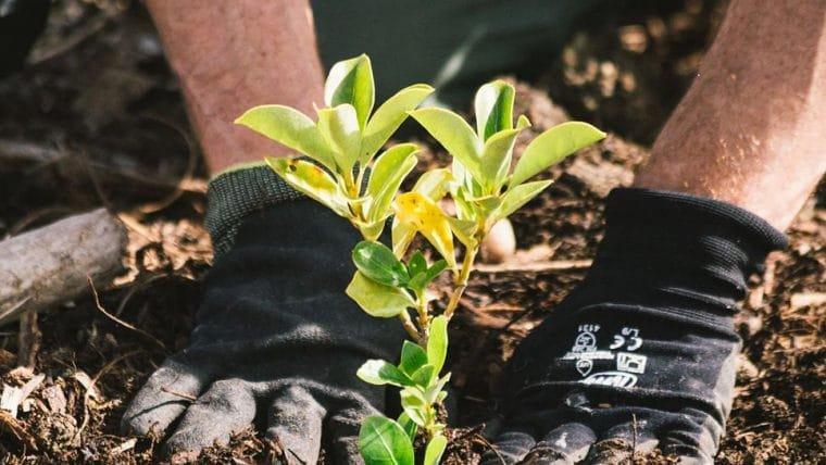 Nova Zelândia vai plantar uma árvore para cada decepção de 2020 na