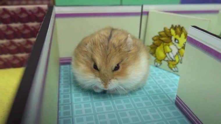 Fã recria cenários de Pokémon Red e Blue em labirinto para hamster