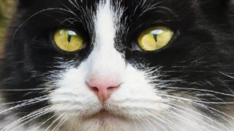 Site usa inteligência artificial para criar fotos de gatinhos