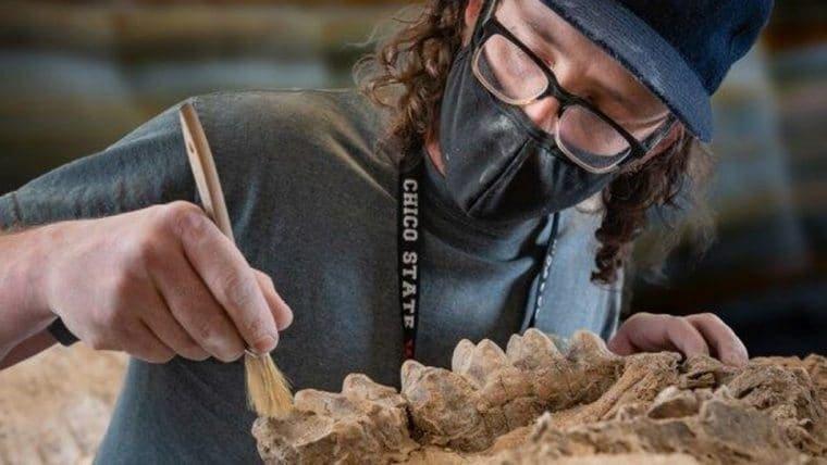 Guarda-florestal encontra fósseis de oito milhões de anos por acidente
