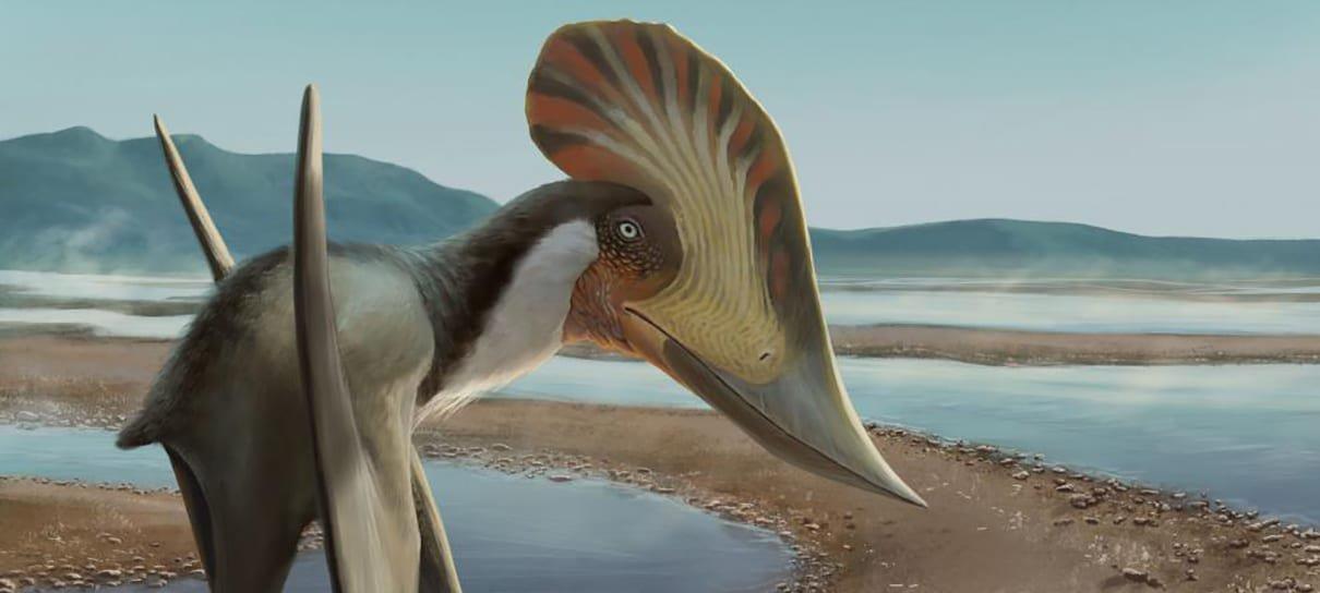 Novo pterossauro brasileiro é descoberto e recebe nome inspirado na Mulher-Maravilha
