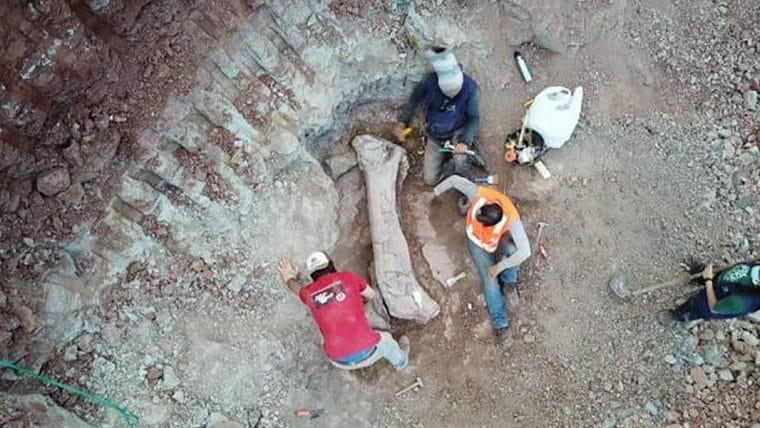 Fóssil gigante de dinossauro é encontrado durante obra de ferrovia no Maranhão