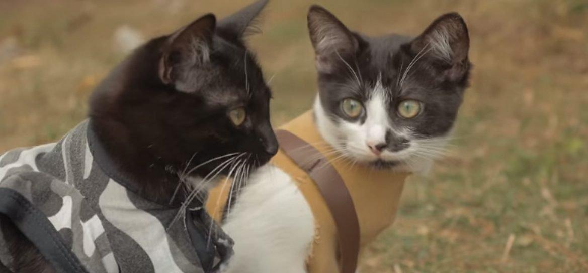 Cats vs Zombies é a versão mais adorável do apocalipse zumbi