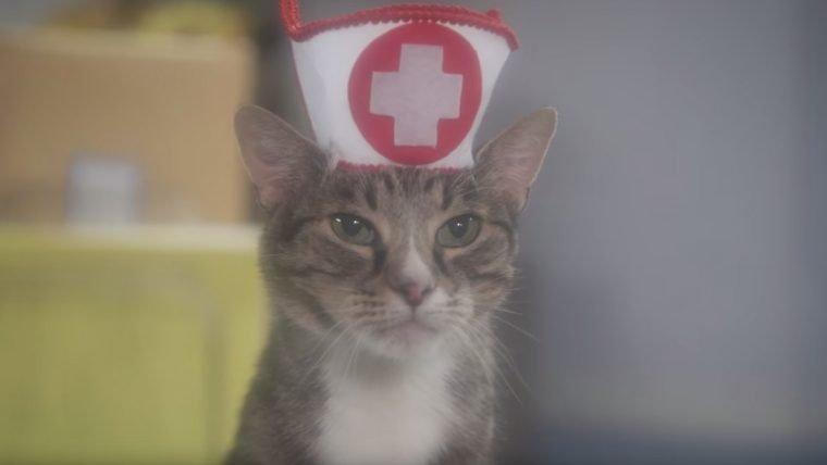 Novela de felinos é um resumo purr-feito da internet